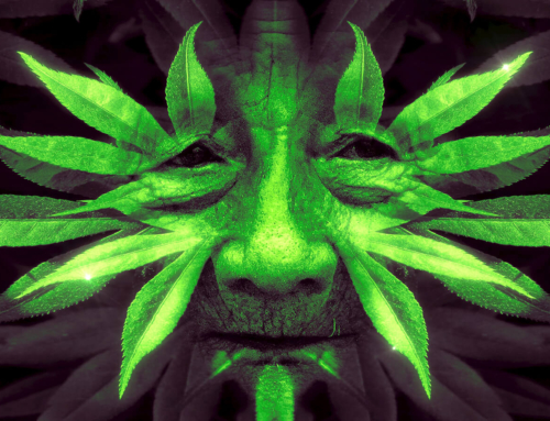 Shamanism For All